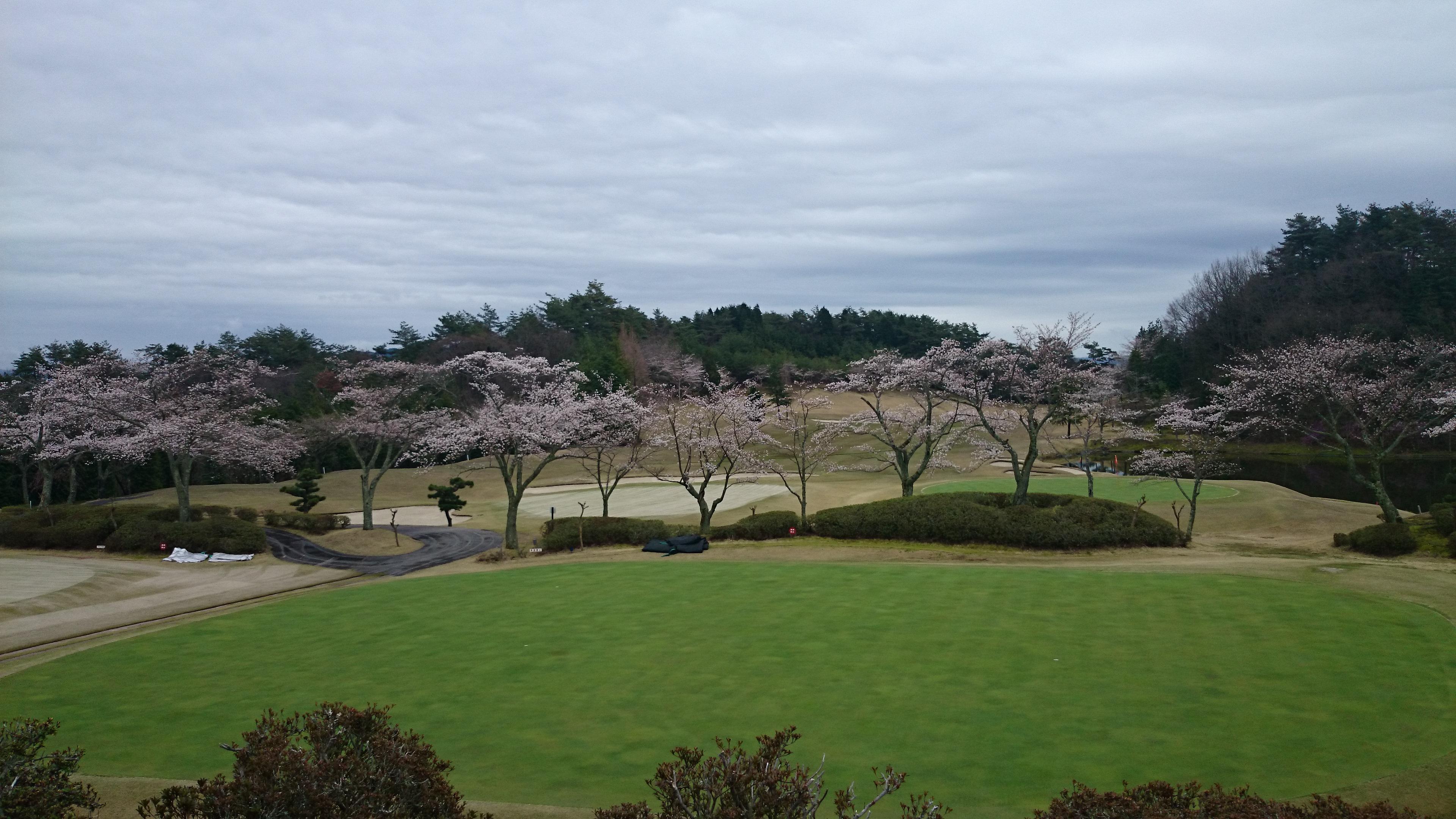 桜2015 4 6